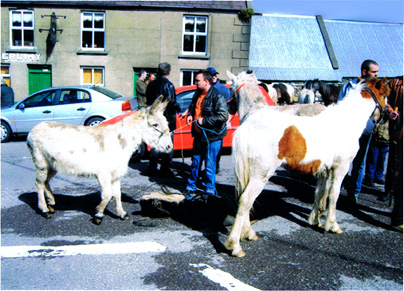 Annascaul Horse Fair
