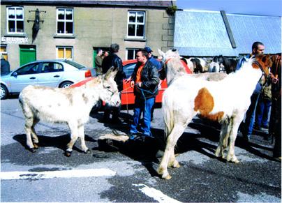 Annascaul Horse Fair